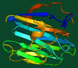 SHBG molecule